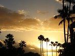 Same palms at sunset.