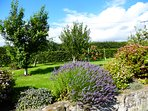 Babingtons Cottage - the Orchard facing the Lammermuir Hills