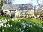Blow away the cobwebs - visit the NT snowdrop display at Plas yn Rhiw this 2019 - 15min drive