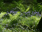 Beautiful woodland walks in May !