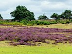 Enjoy beautiful walking across the New Forest