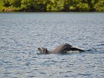 Dolphins visit the bay occasionally.  Early morning or late afternoons are the best
