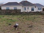 Back of property ..... my dog Summer !!
