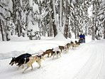 Lots of local winter activities, dogsledding,or try the exciting new fat biking trails Rentals avail