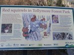 Red Squirrels in Tollymore