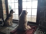 'We love our very own waterfront view from Blue Heron's glass French doors' signed Chester & Casey