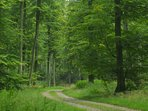 Forêt d' Arques-la-Bataille