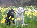 Monty and Flynn - Host Dogs