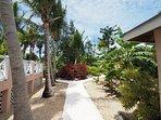 bougainvillea in palm garden
