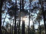 Forêt du domaine