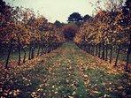Le verger en automne