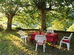 Le petit déjeuner sous les platanes en été