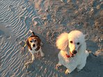 Our beach is the doggonest best beach you will ever want to put your paws on!!