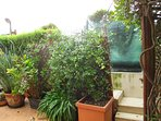 Terrazzo-giardino con  siepe che garantisce la PRIVACY e piante SEMPREVERDI con fiori