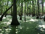 Swamp Tours 20 minutes from Cottage!