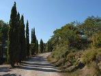 Bordée de pins de Provence, L'entrée de la propriété