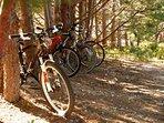 Retour de randonnées en VTT, les pins de Provence sont les supports de vélos