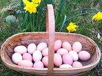 Delicious free-range eggs are available to purchase.