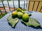 Figs, pomegranates, oranges and lemons in garden