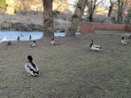 Our feathered friends and neighbours.