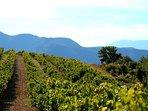 Le terroir viticole de Nyons classé 'Côtes du Rhône village' en 2019,