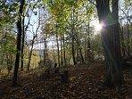 Bosque de la finca de la casa rural