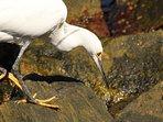 Contato com seres vivos marinhos sempre acontece em nossas expedições.