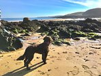 Award winning dog friendly Coldingham Bay