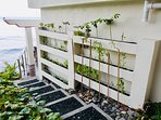 Herbs and vegetable living walls