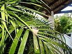 Hummingbird nest in palm tree