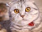 Notre chat (maman) Mona-Lisa