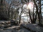 Winter wonderland stroll through our paddock