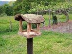 Comedero Pájaros