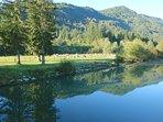 Ribno: Popular picnic and swimming spot.