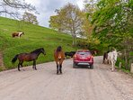Driveway to the home is through the Ranch property.  You may have to stop for horses:)