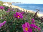View of Jurassic Coastline from gardens in Lyme