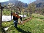 Le potager et le verger familial cultivés en permaculture