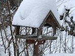 Bird feeder in winter.