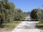 La propriété se situe sur une oliveraie bio.