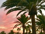 Red sky at night, shepherds delights. The iconic palm trees of Lanzarote.