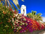 Beautiful bougainvillea a lanzarote delight!