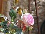 terrasse fleurie et ombragée