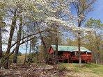 Dogwoods frame the cabin as spring arrives,  Spring 2019.