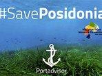 IMPORTANTE: la playa de Sa Ràpita acumula montañas de posidonia, no está limpia de plantas.