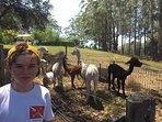 feed the alpacs