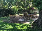 Shaded seating area under 300 year old carob bean trees