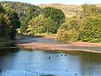 Duck pond Stirling University