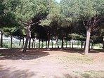 Il parco della antica villa Doria Panphili
