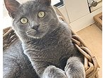 Meet Kit our resident young cat, he is adorable, loving & playful. Cat food is provided.
