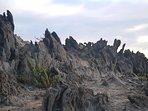 Paisaje volcánico, senderos en el Tabaibal del Poris